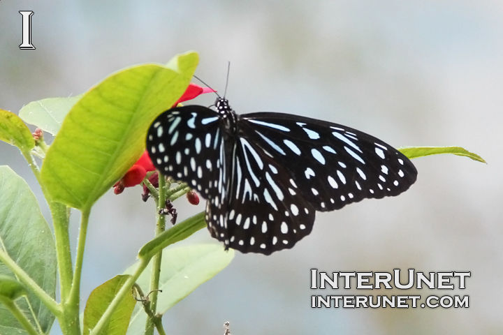 butterfly-on-the-flower