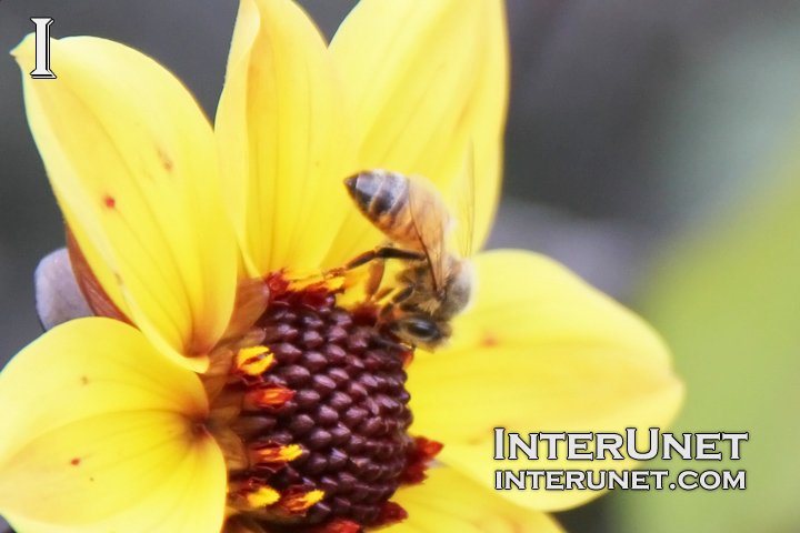 bee-on-yellow-flower
