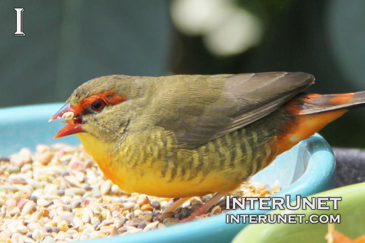 bird-pecking-seeds