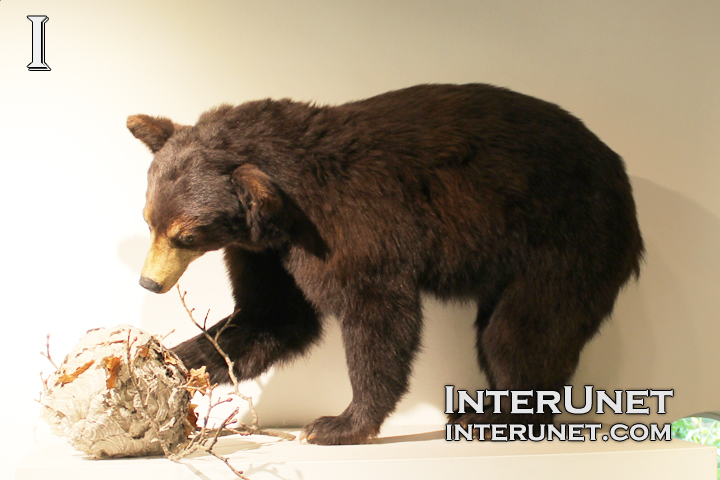 black-bear-sculpture