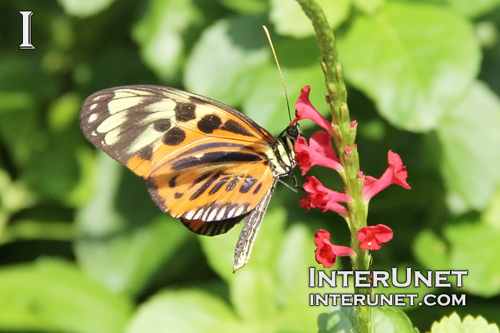 butterfly-on-the-red-flower