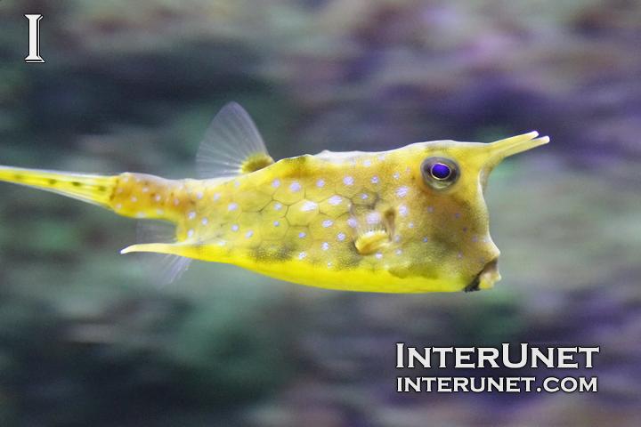 underwater-creature