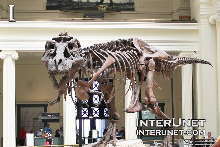 Dinosaur-at-Field-Museum