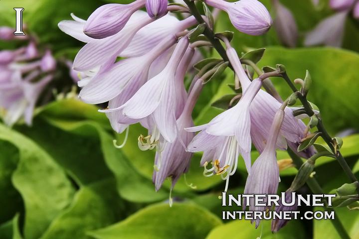 beautiful-flowers