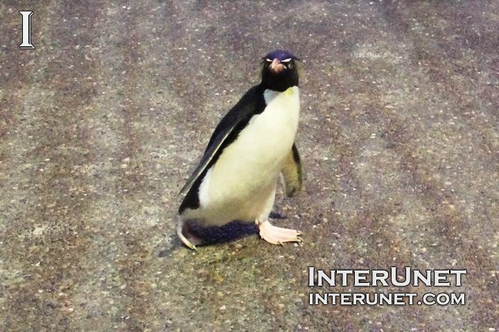 walking-penguin