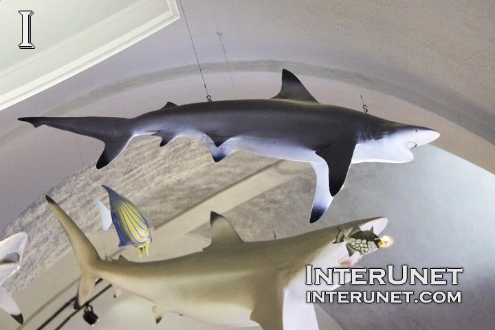 shark-sculptures