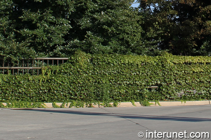 metal fence covered by green plants