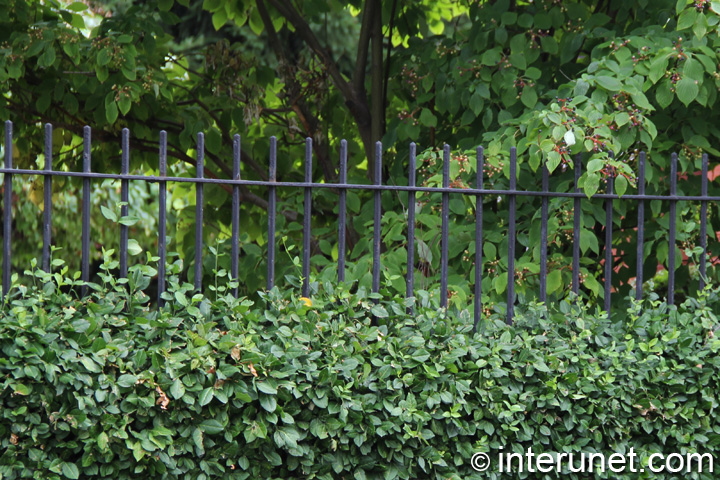 metal-fence-hedge-combination