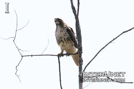 falcon-on-the-tree