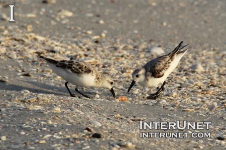 two-birds-on-the-ocean-shore