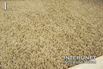 carpet-in-the-bedroom