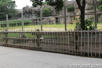 double-fence-electric-wood