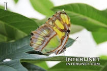 beautiful-butterfly