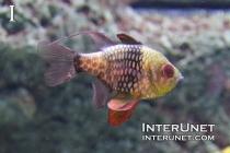 a-fish