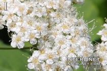 amazing-white-flowers