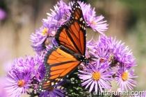 beautiful-butterfly-on-flower