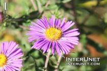 beautiful-purple-flower