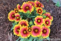 beautiful-summer-flowers