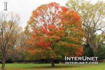 beautiful-tree-in-fall