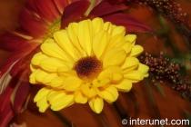 beautiful-yellow-flower