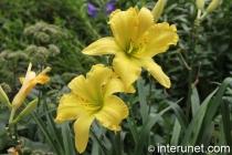 beautiful-yellow-flowers
