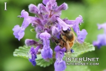 bee-in-the-flower
