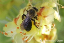 bee-on-spring-flower
