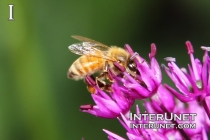 bee-on-the-flower