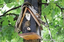 bird-house-on-oak-tree