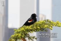 bird-in-the-city