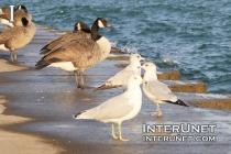 birds-on-the-lake