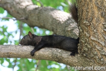 black-squirrel-resting-on-the-tree