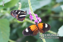 butterflies-on-the-flower