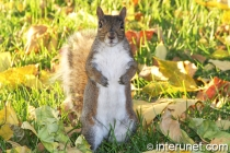 cute-squirrel-on-the-grass