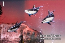 dolphins-jumping-from-the-water