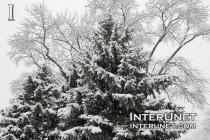 first-snow-Chicago