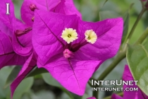 amazing-flower