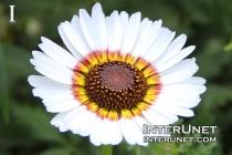 beautiful-white-flower