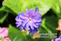 flower-blue-beautiful