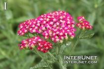 amazing-flowers