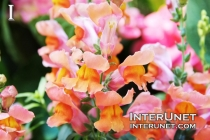 flowers-amazingly-beautiful