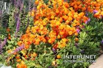 flowers-beautiful