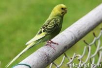 green-parrot