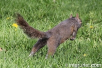 jumping-squirrel