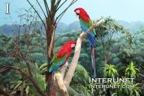 Parrots-in-Brookfield-Zoo