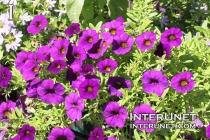 purple-flowers-beautiful