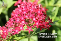red-stunning-flowers