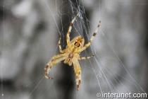 spider making net