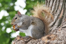 squirrel-eating-lunch