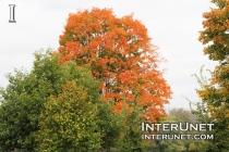 trees-in-fall